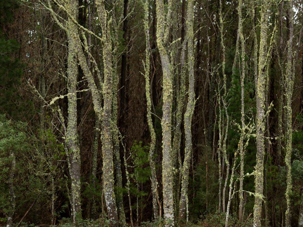 Blue Tier, Tasmanian Forest Agreement Forest