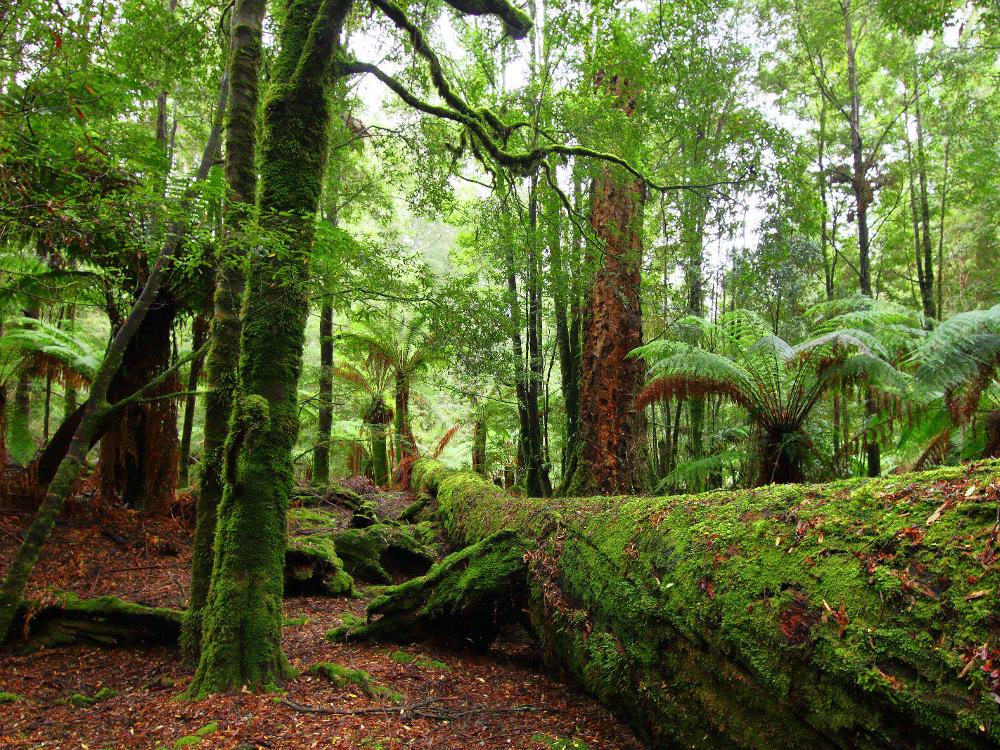takayna / tarkine, Tasmania