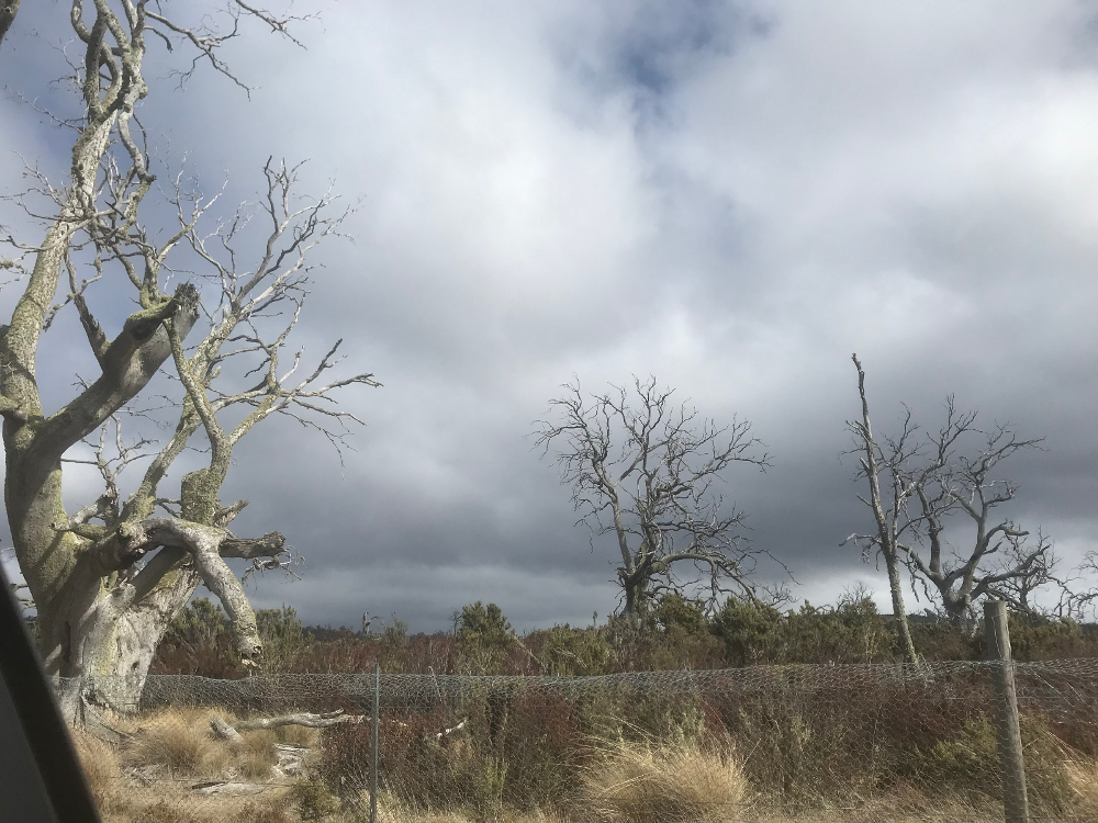 Degraded Landscape, Midlands, Tasmania