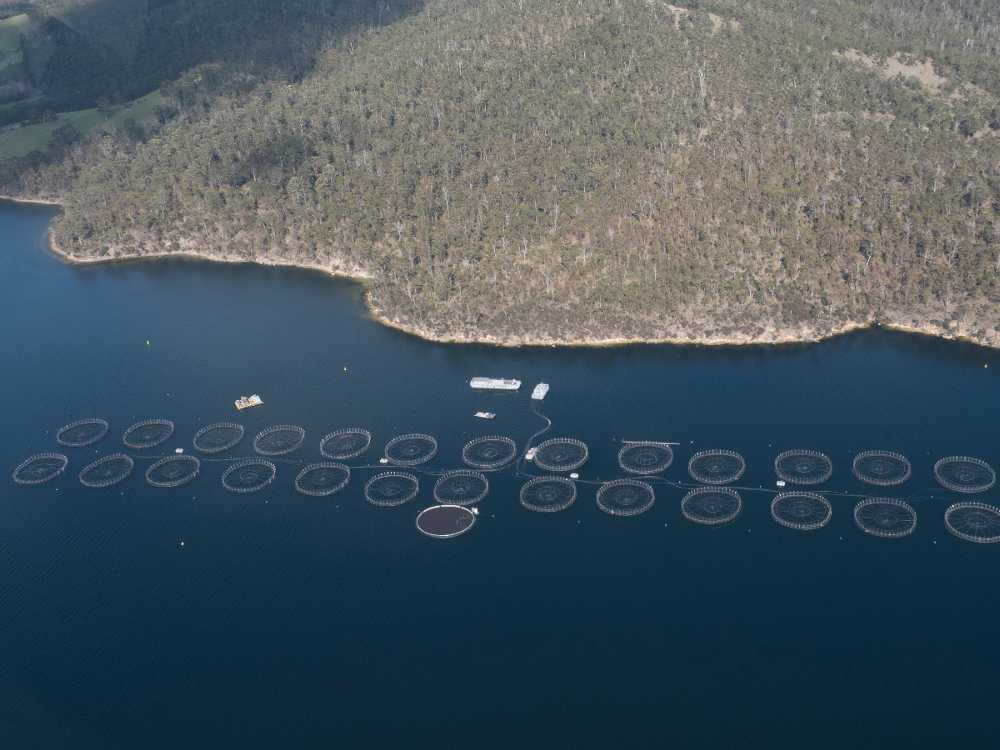 Fish Farm in Okehampton Bay, Tasmania
