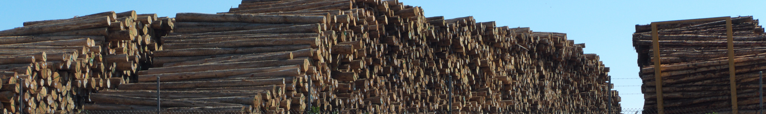 Log Pile at the Port of Burnie, Tasmania