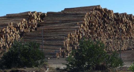 Log Pile at the Port of Burnie, Tasmania