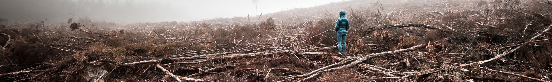 Logged Forest, Tarkine