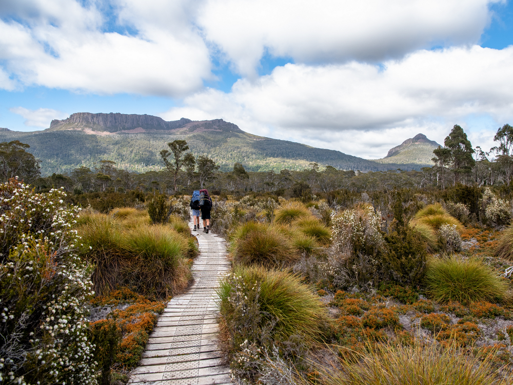 Overland Track, Cradle Mountain-Lake St Clair National Park, in the Tasmanian Wilderness World Heritage Area, Tasmania
