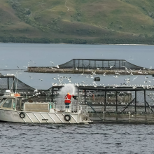 Fish Farm, Macquarie Harbor