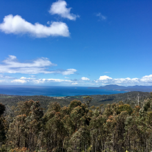 Wielangta, Tasmanian Forest Agreement Forest