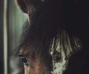 Sad Horse