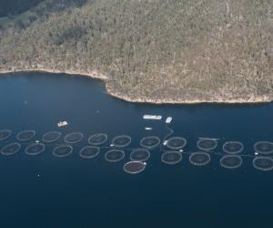 Fish Farm in Okehampton Bay, Tasmania