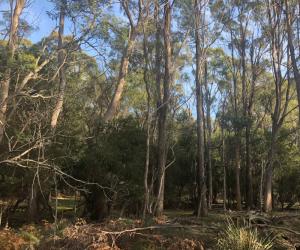 Westbury Informal Reserve, Site of Proposed Northern Prison, Westbury, Tasmania