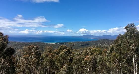 Wielangta, Tasmanian Forest Agreement Forest